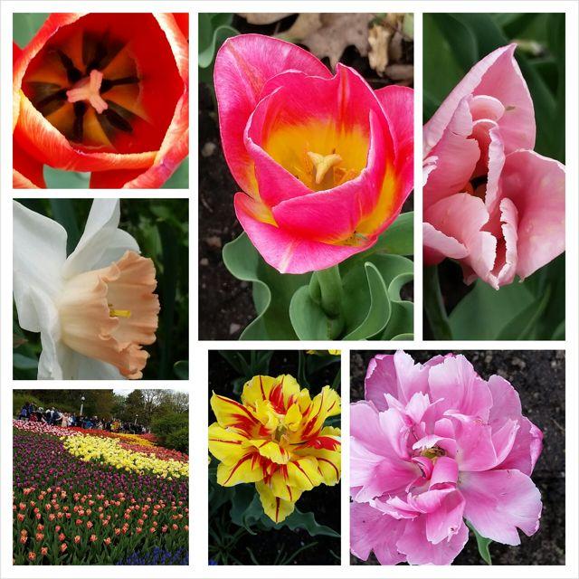 road - tulips