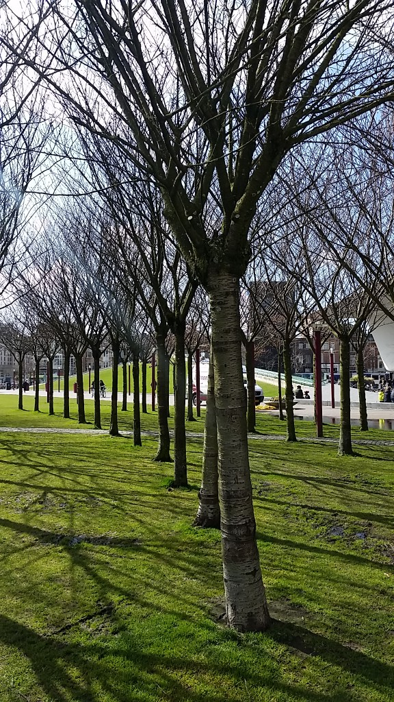amsterdam - trees